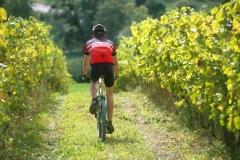 Door de wijngaarden fietsen